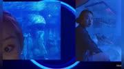 水母:第一次看到這么美的水母以及生長過程,海洋世界太神奇了!