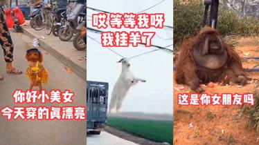 搞笑动物:给斗牛犬第一次玩滑板,太兴奋直接