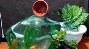 自动换水鱼缸,换的水自动浇花,懒人必备!_1